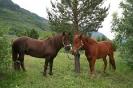 2007 er andre året Lyngshestlandet er med på Riddu Riđđu festivalen i Manndalen. Vi hadde med 8 hester som ble brukt under en barnerideskole over 2 dager og fjellturer for voksne/barn. Her er Rein og Vind klar for dagens innsats. Foto: Evald Bjerkli