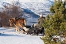 mars 09, Yme i skogkanten ved fjæra, foto Lyngen Lodge