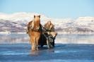 mars 09, Yme og Geirmund koser seg i vårsola, foto Lyngen Lodge